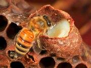 Курсы пчеловода он-лайн